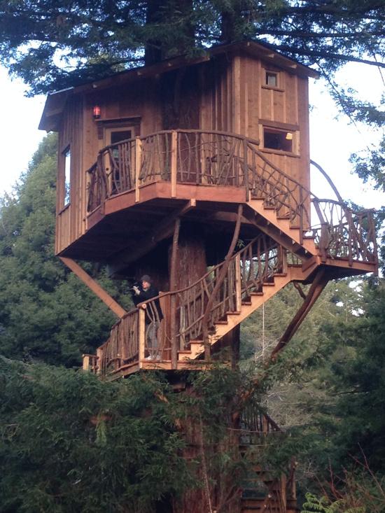 treehouse masters animal planet, redwood kings animal planet, extreme treehouses animal planet, on redwoods treehouse animal planet